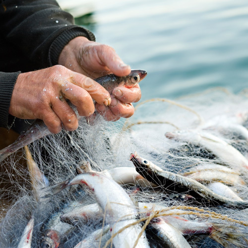 Choosing the Best Fish for Your Restaurant